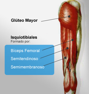 Estudio biomecanico Musculos que componen isquitibiales